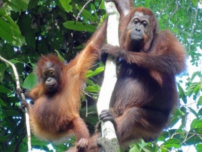 HUTAN_mother_and_babay-480x400