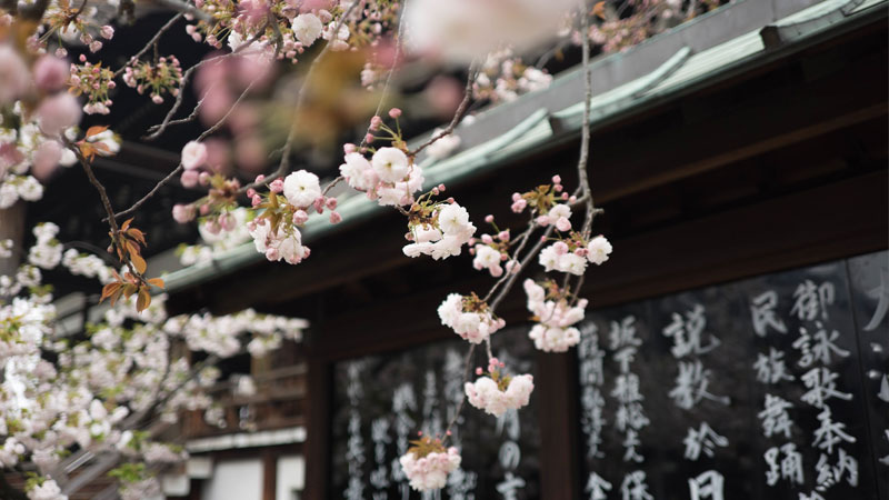 Singlereisen Japan