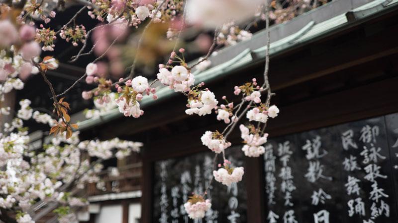 Beste Reisezeit Japan