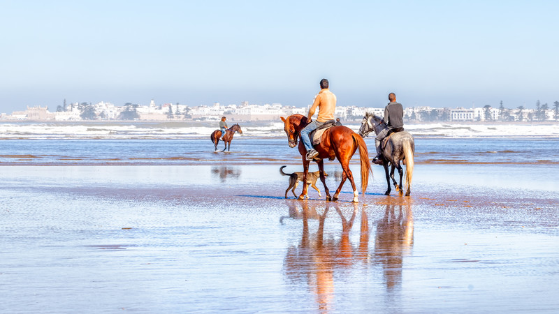 Intrepid Travel-morocco_essaouira_horse_riding_ss159657794