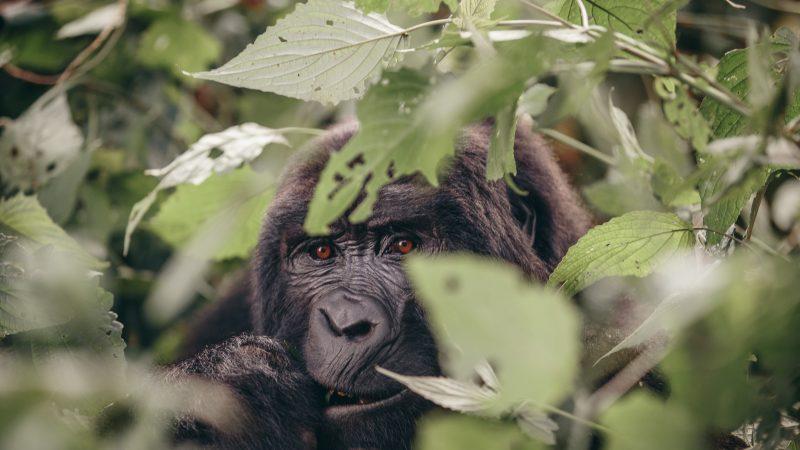 Be-Fearless_Uganda_9728