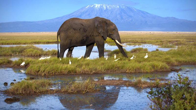 Afrika-Tansanaia-Kilimandscharo-Elefant-Beste-Reiseziele-Januar