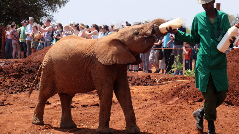 Intrepid Travel-Kenia-Nairobi-Baby-Elefant