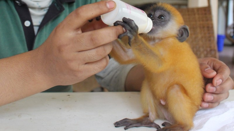 The-Intrepid-Foundation-Cambodia_ACCB_baby-monkey